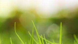 green-grass-hd-wallpaper